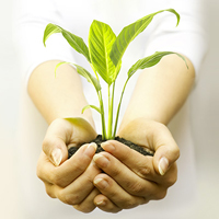 Plant Seeds Of Promotional Success